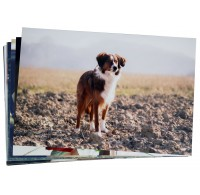 "PHOTO PRINTS - 8""x12"" (20x30cm)"